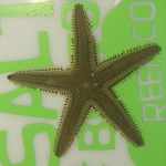 Beaded Sand Sifting Star