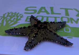 Yellow-Green Knobbed Starfish